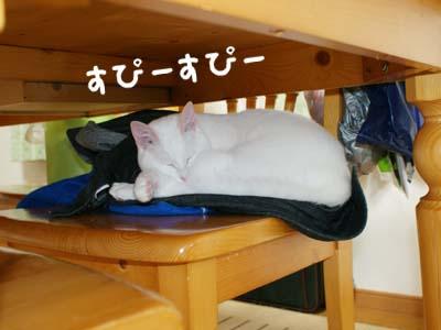 cat349