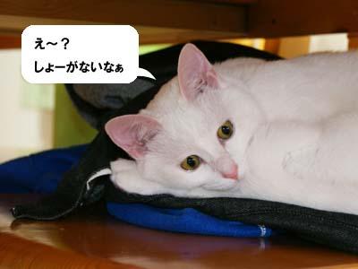 cat351