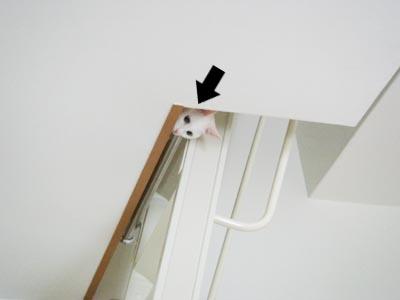 cat354