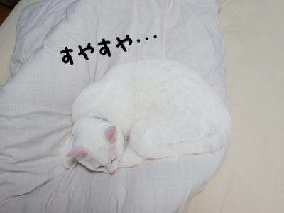 cat355