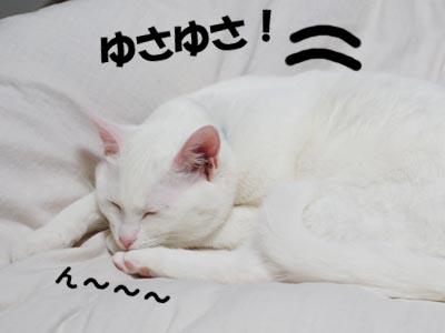 cat356