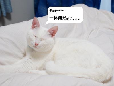 cat357