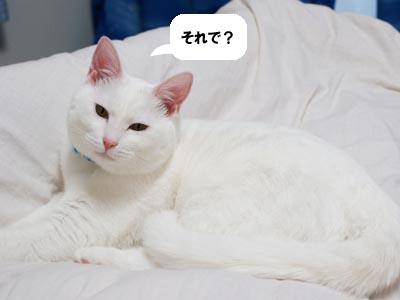 cat358