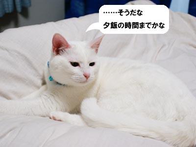 cat359