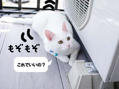 cat369