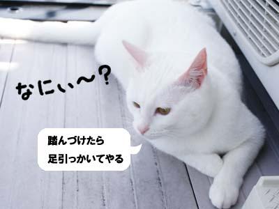 cat371
