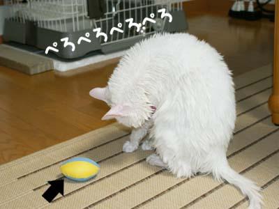 cat374