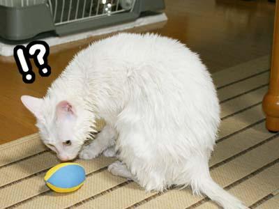 cat375