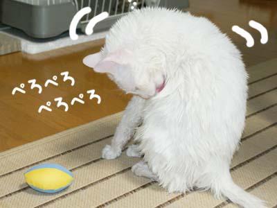 cat376
