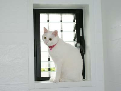 cat379