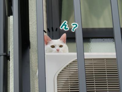 cat380