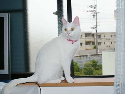 cat384