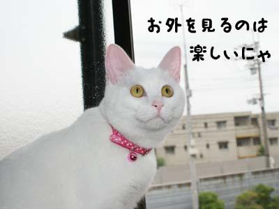 cat385