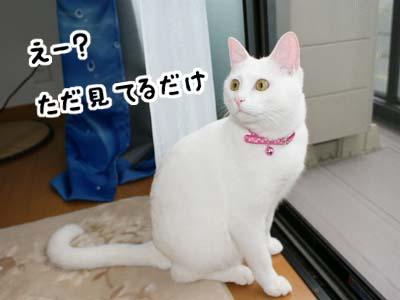 cat387
