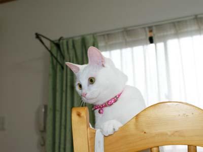 cat388