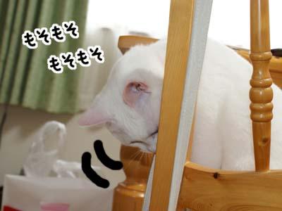 cat389