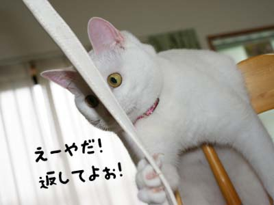 cat391