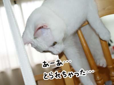 cat392
