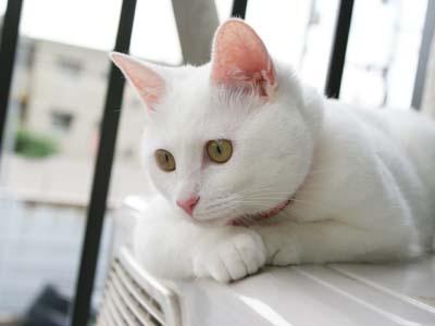 cat400
