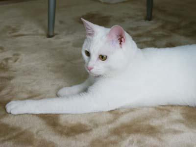 cat401