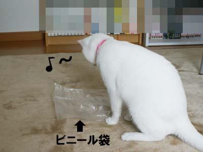 cat403