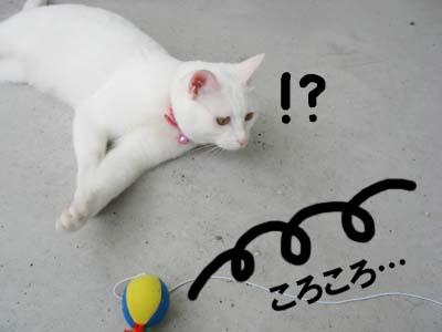 cat408