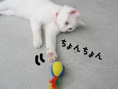 cat409