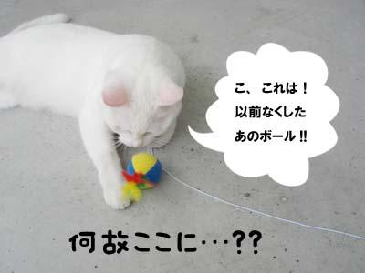 cat410