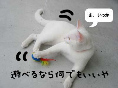 cat411