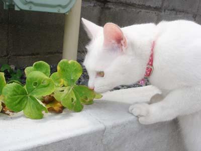 cat412