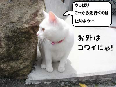 cat416
