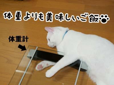cat421