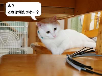 cat423