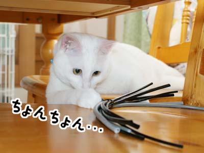 cat424
