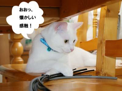 cat425