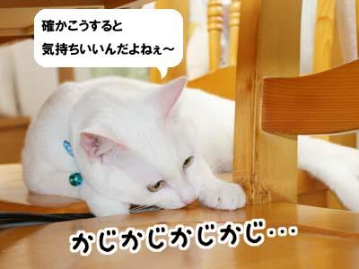 cat426