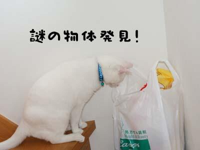 cat427
