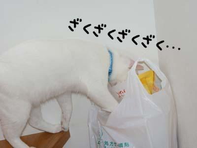 cat428
