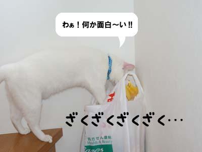 cat429