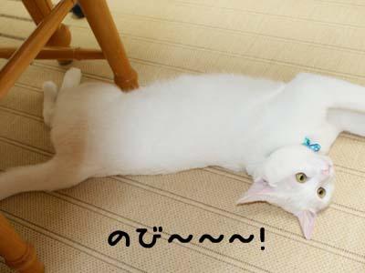 cat431