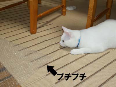 cat435