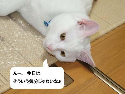 cat438
