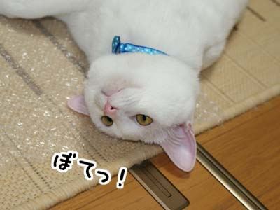 cat439