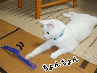 cat441