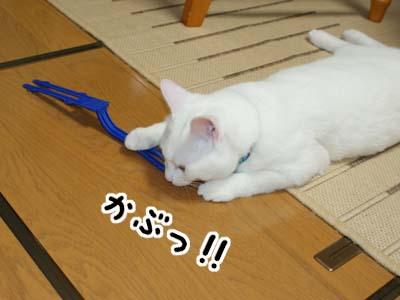 cat442