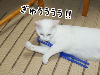 cat443