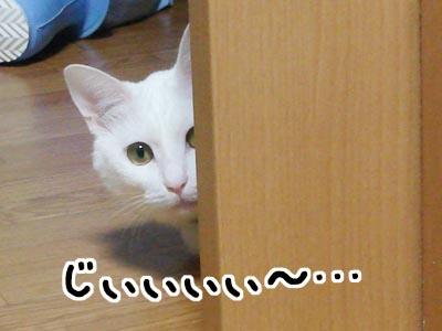 cat444