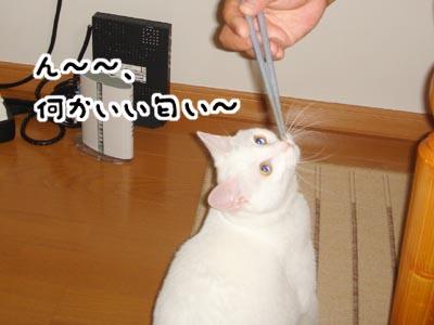 cat446