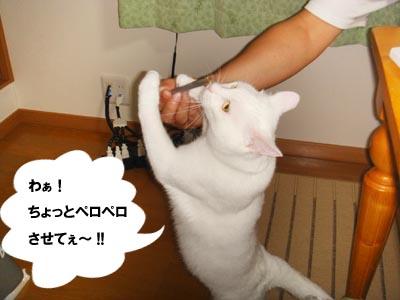 cat447
