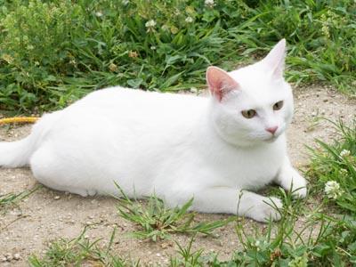 cat448